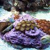 The Alternative Reef