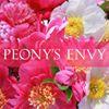 Peony's Envy
