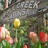 Ripple Creek Cabins