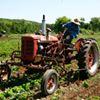 Springdale Farm CSA