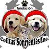 Colitas Sonrientes INC, 501c3 non profit thumb