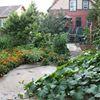 Racey Gardens Urban Homestead
