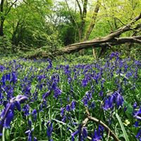 Friends of Bentley Priory Nature Reserve