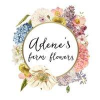 Adene's farm flowers