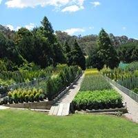 Ross Conifers Garden Nursery