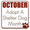 Jefferson County Humane Society and Jefferson County Animal Shelter