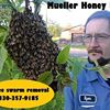 Mueller Honey Bee