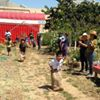 The New City Farm
