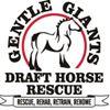 Gentle Giants Draft Horse Rescue thumb