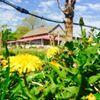 Clovis Point Vineyard