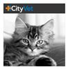 CityVet