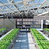 Bright Farm