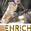 Houston Zoo Animal Enrichment