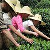 Satori Tea Company
