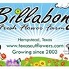Billabong Fresh Flower Farm