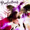Pawfections Pet Salon