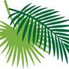 International Palm Society