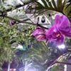 Growco Indoor Garden Supply