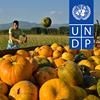 UNDP MK