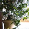 Reinhardt Blooms