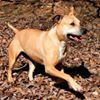 Crabapple Knoll Pets for Adoption