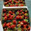 Klug Orchards