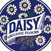 Daisy Flours