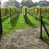 Wijngaard Aan De Breede Beek