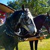 Cole Creek Equestrian Center