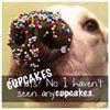 Cupcake Conspiracy