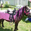 Pony World Adventure LLC.