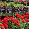 Tonkadale Greenhouse