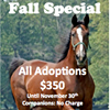 Standardbred Retirement Foundation - Adoptahorse.org