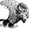 Backyard Bison