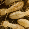 Econ-O-Bug Termite, Pest Control, and Repair