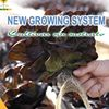 New Growing System