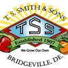 T S  Smith & Sons