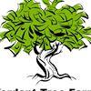 Verdant Tree Farm and Landscape