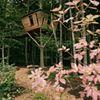 Robins Nest -  Baumhaushotel