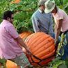 Nipomo Pumpkin Patch