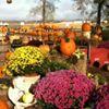 Axdahl's Garden Farm and Greenhouse