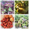 Tess' Organic Garden