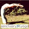 Sanctuary Yoga and Wellness
