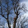 Oregon Woodsmen Tree Service