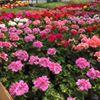 Breidenbaugh Farms & Greenhouses