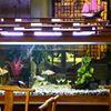 Mr Dee Chinese Restaurant & Take-Away