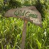 Wild Grass Nature Resort Sri Lanka