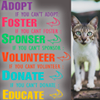 Cat Protection Trust Sri Lanka