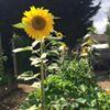 Let's Talk Green Canteen Community Garden Centre