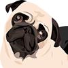 Compassionate Pug Rescue